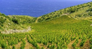 Challenge International du Vin will be honouring Croatian wines