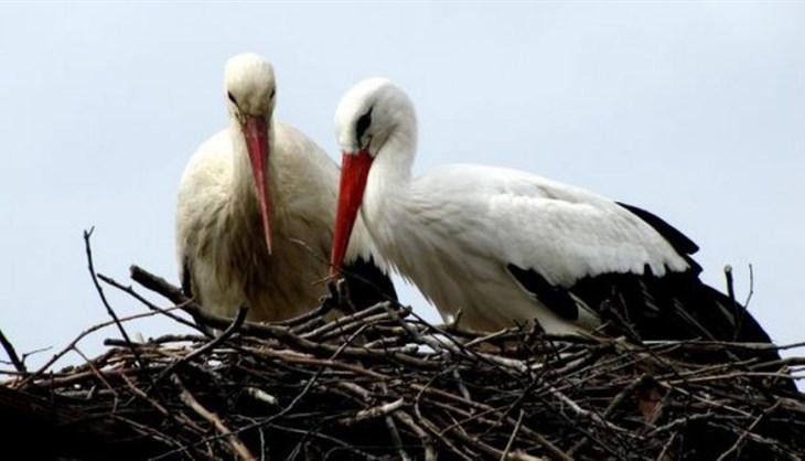 Two love birds (photo: Facebook)