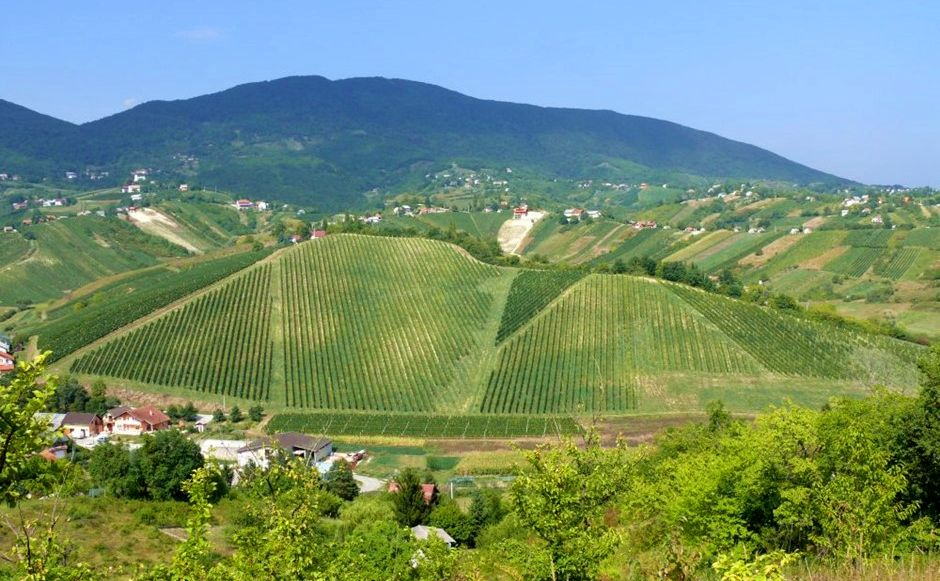Plešivica – Home of Croatian Sparkling Wines