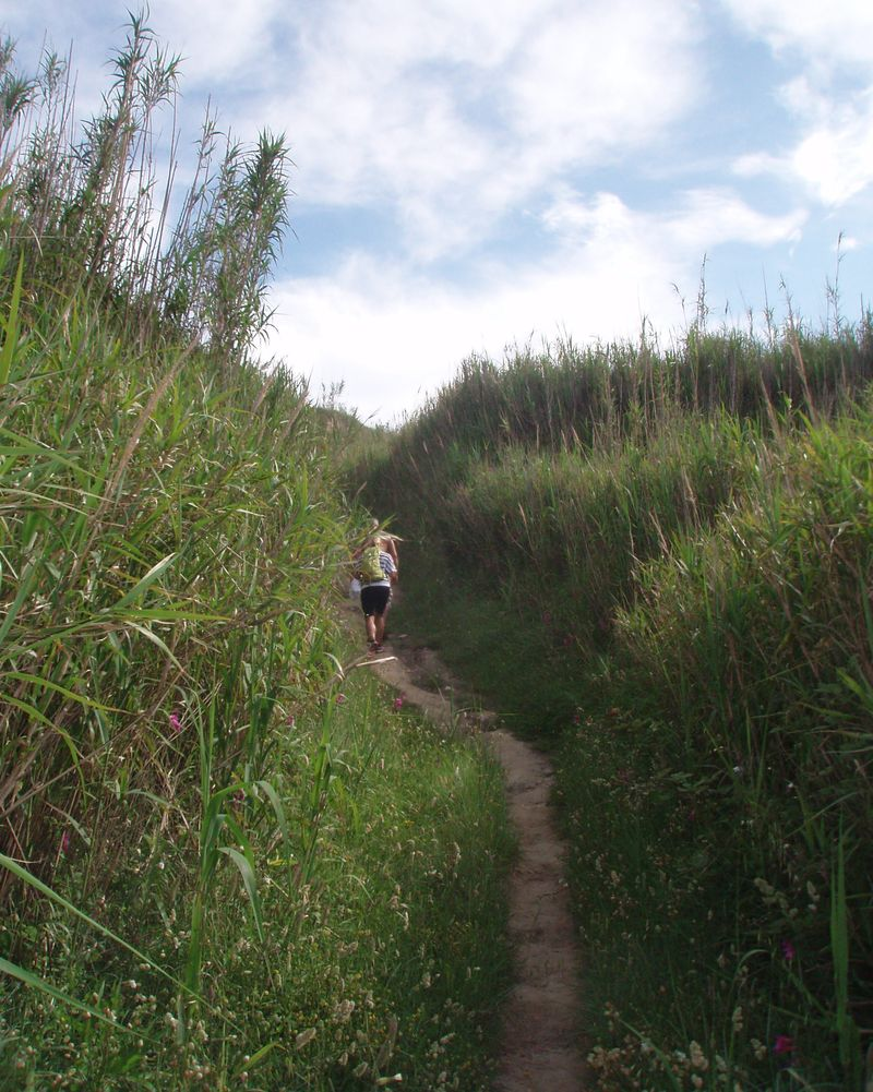 Tourists lost among the tall reeds on one of many paths criss-crossing the island of Susak. The reeds keep the island's sand together, and frame and hide its gardens.
