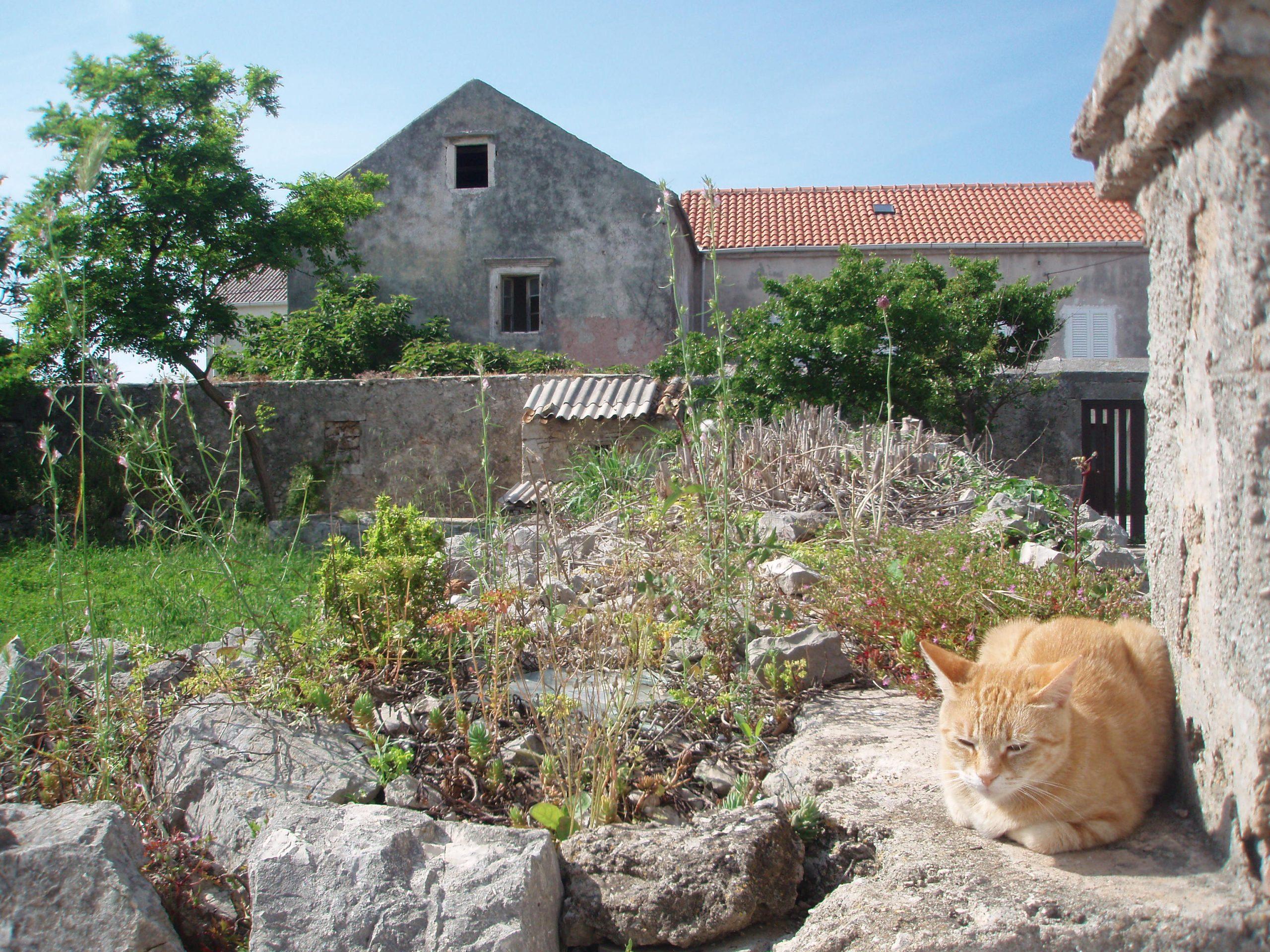 Catnaps in Silba's gardens.