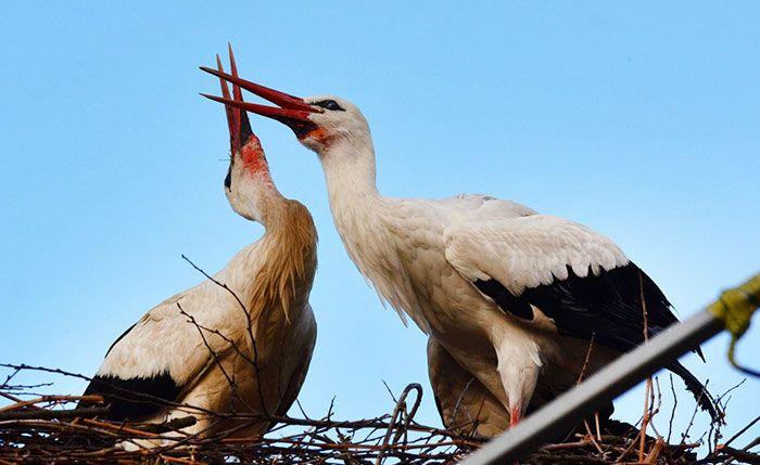Love Birds Help Croatia Win Prestigious Cannes Lion Award in France