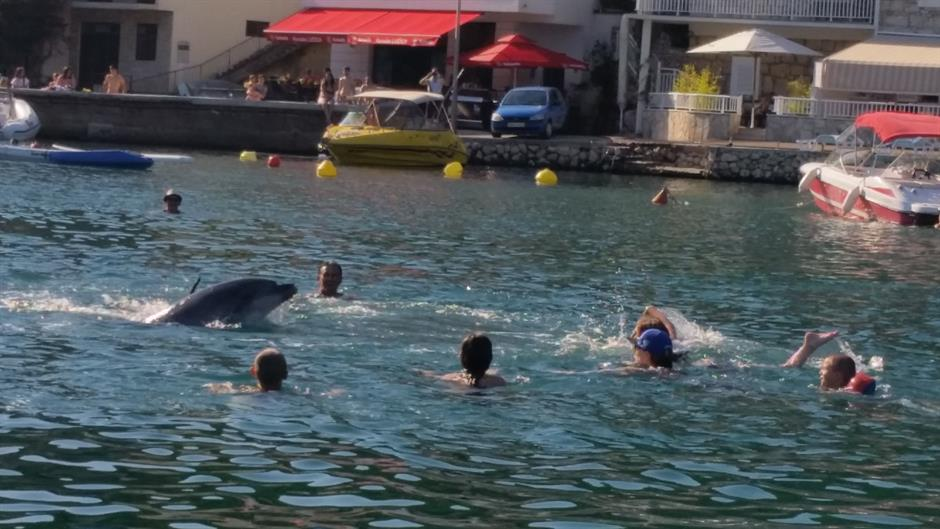 Dolphin joins swimmers in shallow waters in Duboka (photo: N1)
