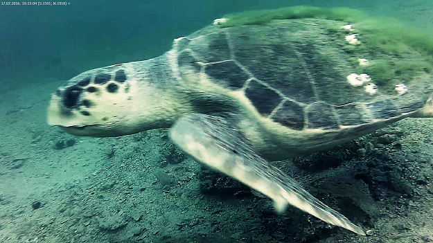 Live Underwater Webcam Captures Rare & Endangered Sea Turtle