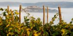 Istria's Benvenuti Winery Triumphant at International Wine Challenge in London