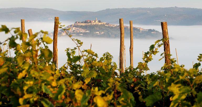 Istria's Benvenuti Winery Triumphant at International Wine Challenge in London