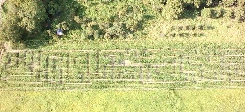 Cornfield labyrinth in Osijek (photo credit: Zeljko Vajak Photography)