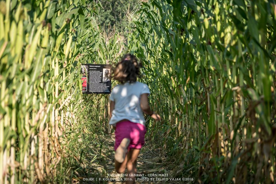 [VIDEO] New Tourist Attraction for Eastern Croatia – Cornfield Labyrinth