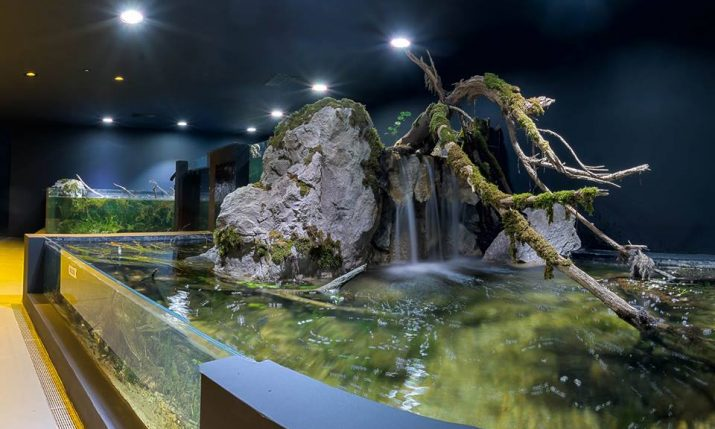 [PHOTOS] First Freshwater Aquarium in Croatia Opens