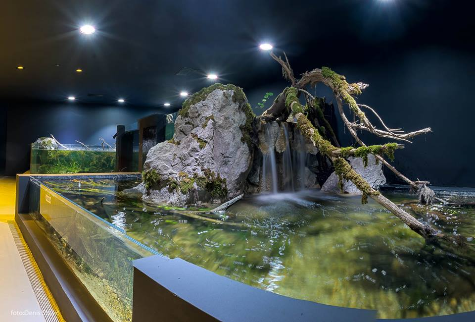 [PHOTOS] First Freshwater Aquarium in Croatia Opens