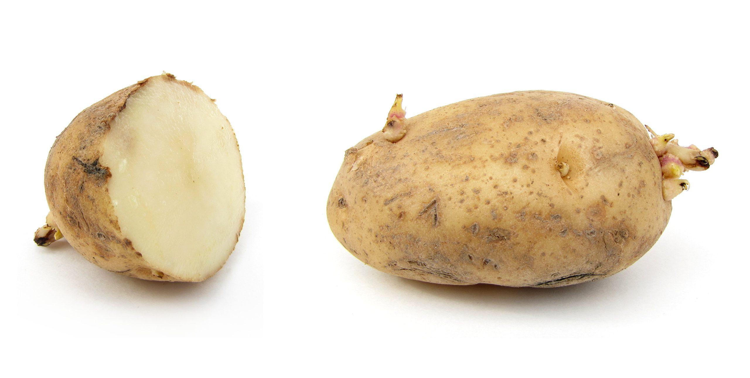 krumpis