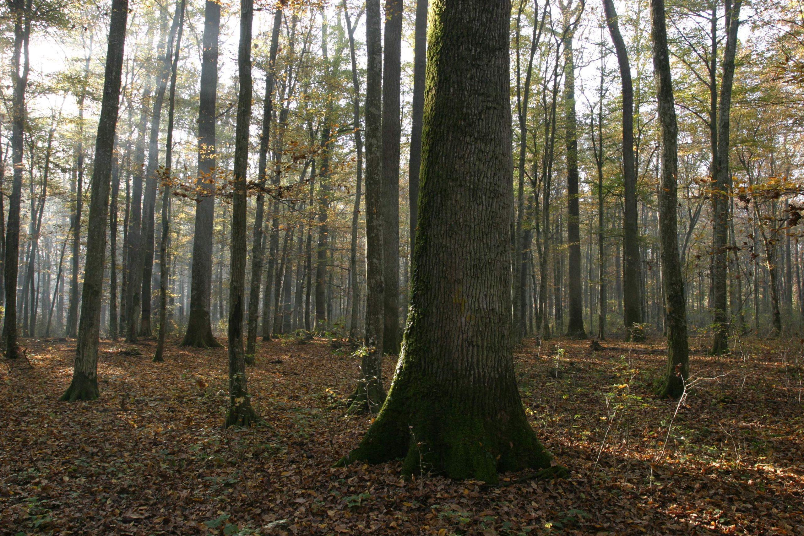 Spačva forest (photo credit: Županja Tourist Board)