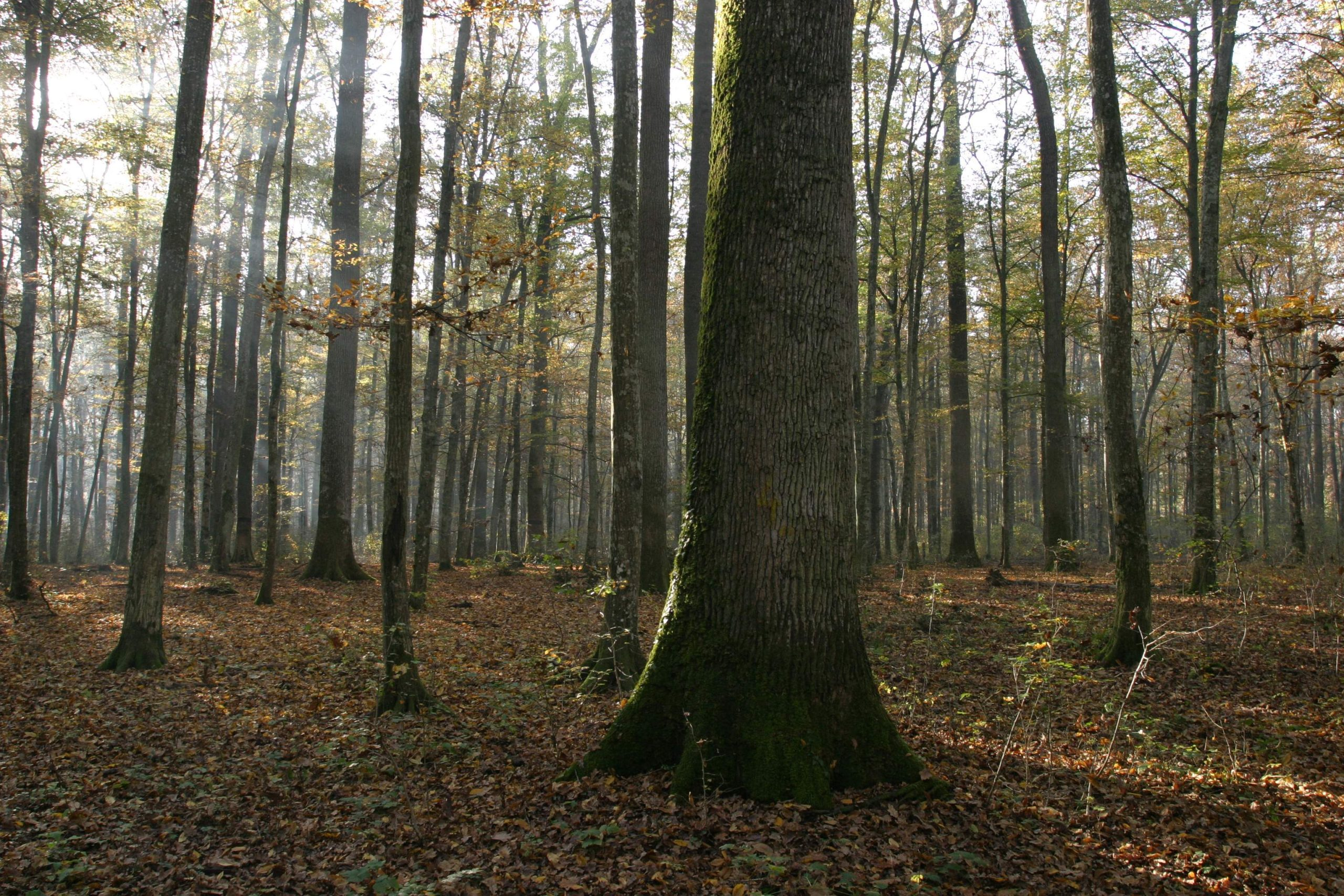Spačva forest (photo credit: Županja Tourist Board)