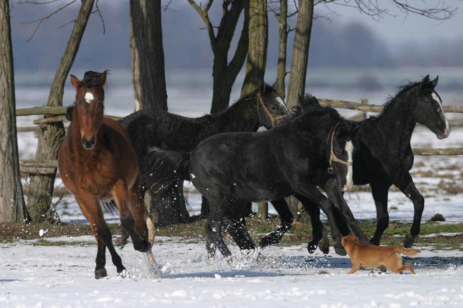 Đakovo stud farm (photo credit: Osijek Tourist Board)