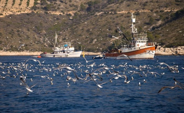 Adriatic Recovery Project: Trawling & Longline Fishing Banned in Adriatic Basin