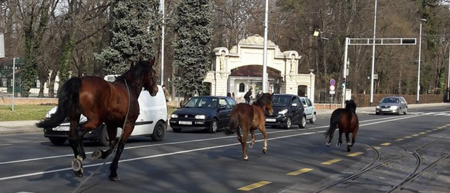 [PHOTO] Loose Horses on Busy Zagreb Road Surprise Motorists