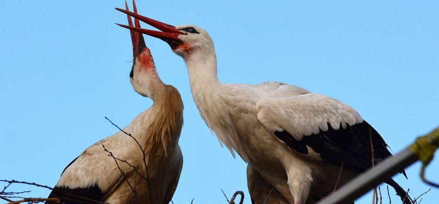 BBC Film Documentary About Croatia's Lovebirds Klepetan & Malena