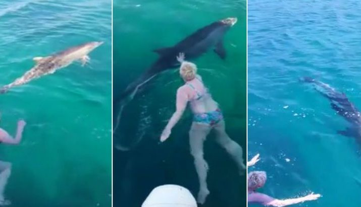 [VIDEO] Dolphin Comes to Swim with Tourists in Korčula Island Bay