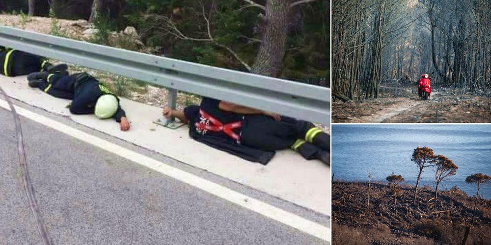 [PHOTOS] Heroic Firefighters Stop Devastating Blaze on Makarska Riviera