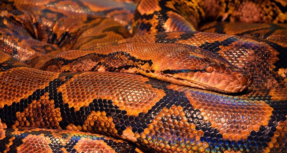 Snakes in Croatia
