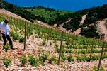 Cracking Croatian Wine: A Visitor-Friendly Guide