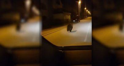 [VIDEO] Bear Running Through Street in Lika