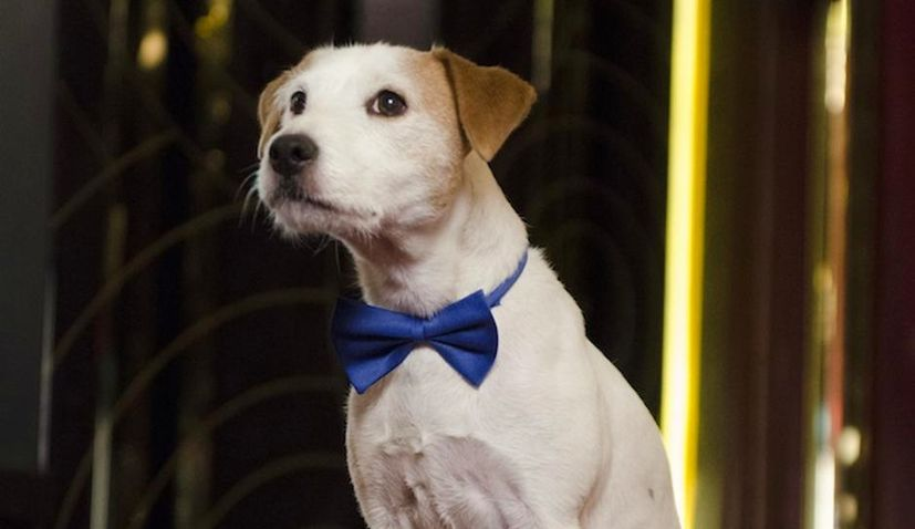 Jack Russell Terrier 'Cheeky' to Make Opera Debut at Croatian National Theatre