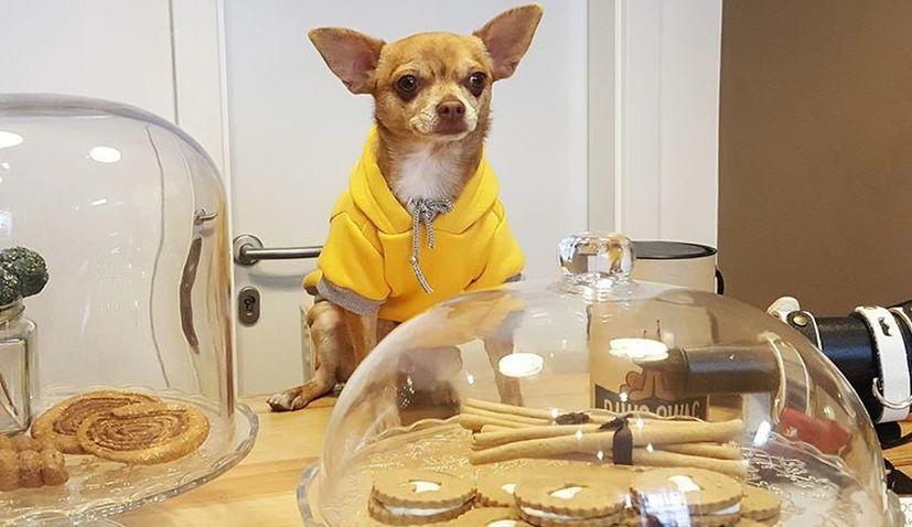 Dog Restaurant to Open in Zagreb