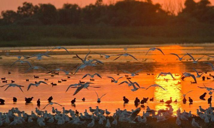 VIDEO: Lonjsko Polje Nature Park – Horses & Storks on the Pastures