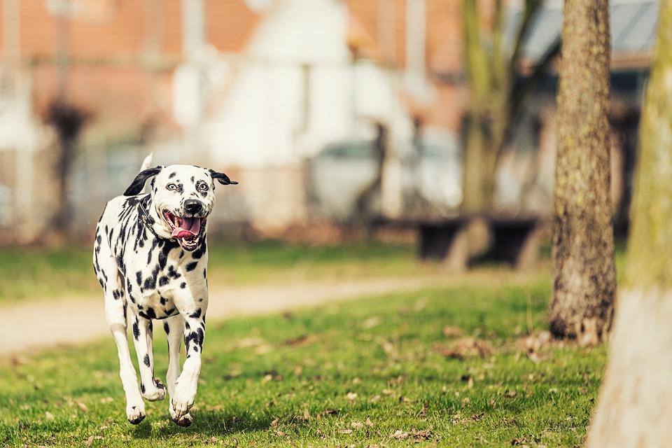 Croatia dogs