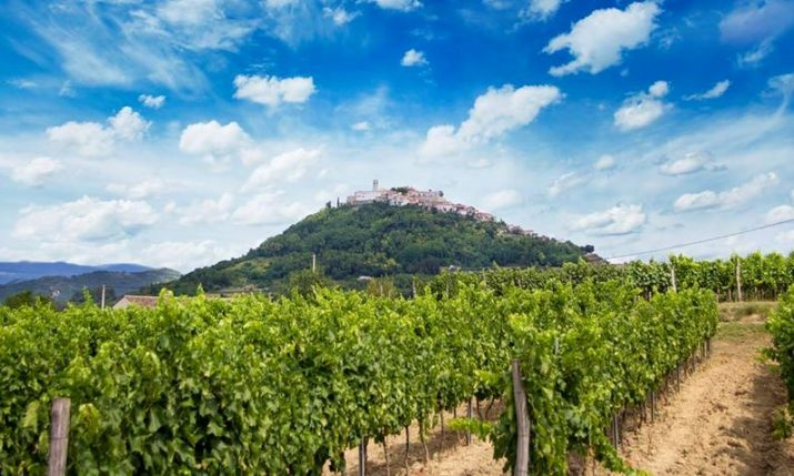 Open Wine Cellars Day in Istria this Weekend