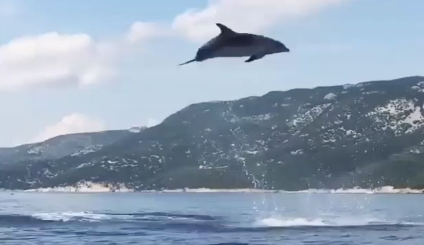 VIDEO: Dolphins put on Stunning Show off the Croatian Coast