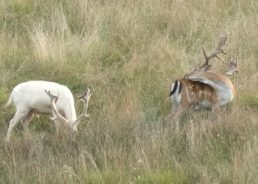 VIDEO: Family Spots Rare White Deer in Croatia