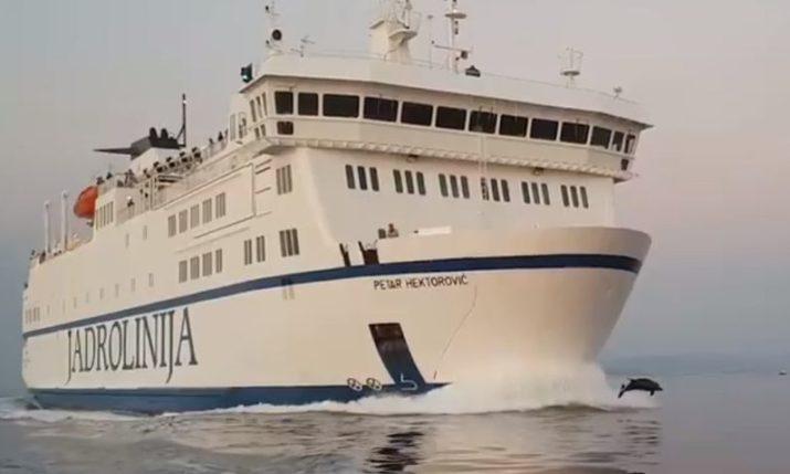VIDEO: Dolphins Race Jadrolinija Ferry to the Island of Vis