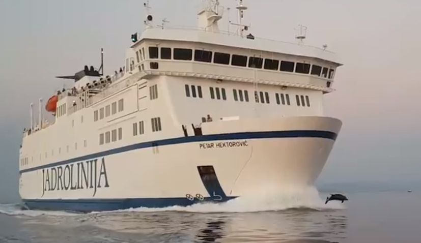 VIDEO: Dolphins Race Jadrolinija Ferry to the Island of Vis