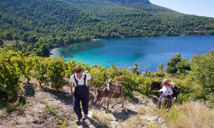 Wine cellars in Peljesac region to open doors on 6-7 Dec