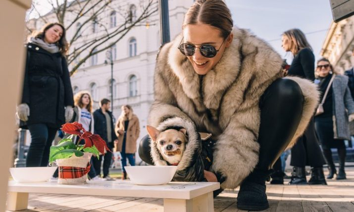 Advent in Zagreb: Capa Pet Bistro opens with special treats for dogs & cats