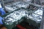 Croatia's seafood becoming more popular abroad