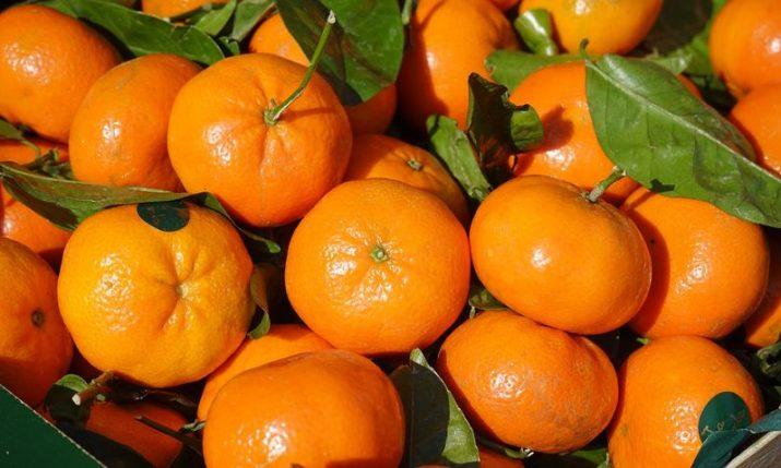 Croatia's mandarin orange production increases by 156%