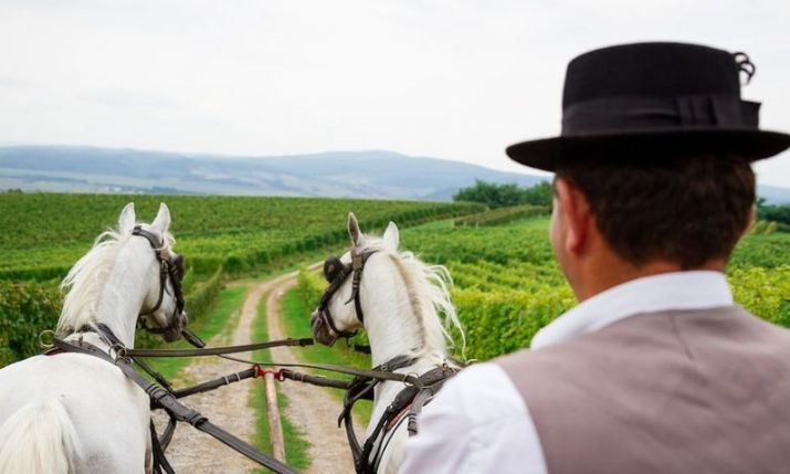 Summer in Slavonia: 5 original things to do