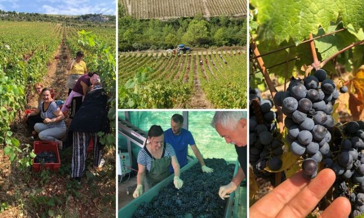 The Croatian Wine Journey: Harvesting memories and new learnings