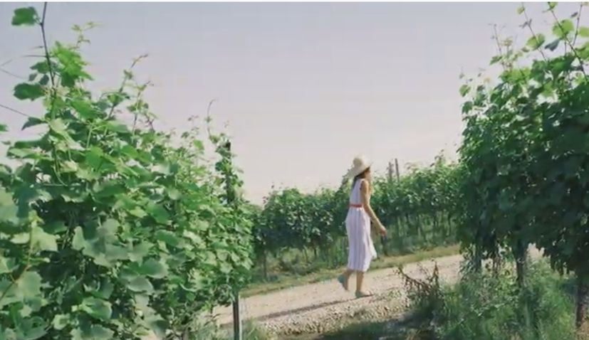 VIDEO: Zagreb – one of the most winetastic cities – finalist in Wine Spectator world competition