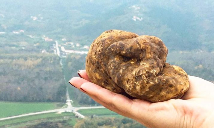 World's longest truffle fair set to take place in Istria