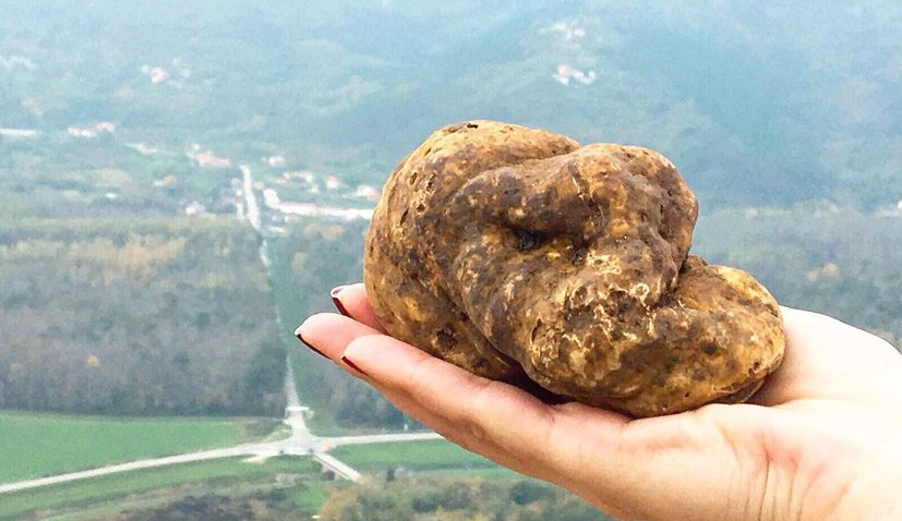 Sotheby's organising Istrian white truffles auction in London for first time