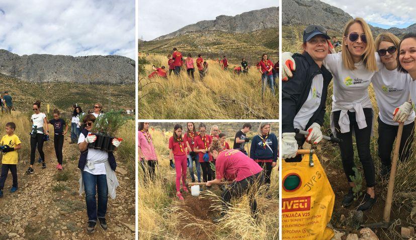 PHOTOS: Hundreds of volunteers plant trees to reforest fire-damaged Žrnovnica