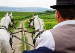 UNESCO heritage protection push for Lipizzaner horses