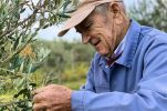 At 96, meet maybe the oldest olive oil producer in Croatia
