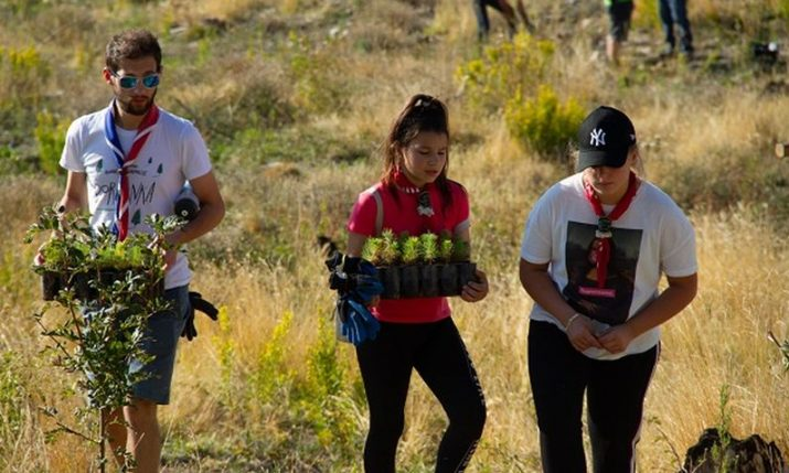 PHOTOS: Record number of trees planted in Dalmatia in reforesting action this weekend