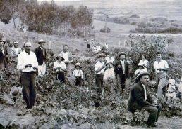 Pioneer Croatian settlers in New Zealand: Srhoj family story