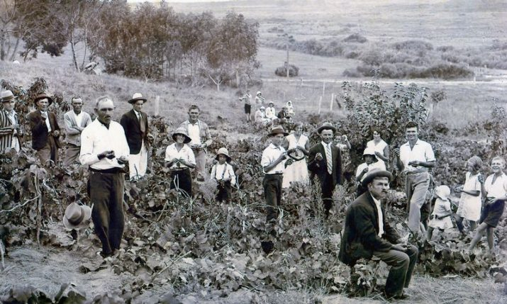 Pioneer Croatian settlers in New Zealand: Srhoj family story